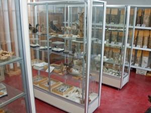 標本室(図書室)