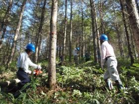 林業女子が活躍?