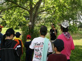 オニグルミの葉の作りを説明