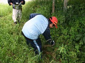 草木染めの材料を集める
