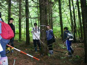 標茶区人工林での毎木調査