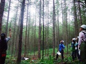 標茶区での間伐の選木調査