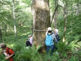 白糠区での天然林の毎木調査