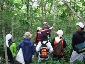 天然林の毎木調査