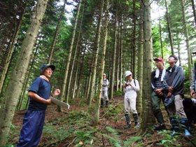 人工林の見学