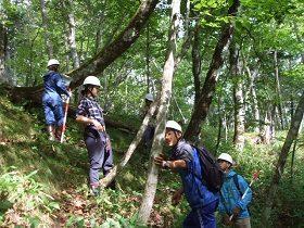 天然林での毎木調査