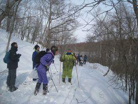 冬の林内で樹木識別