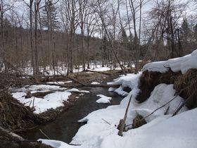 雪の残る林内