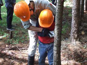 立木を切る