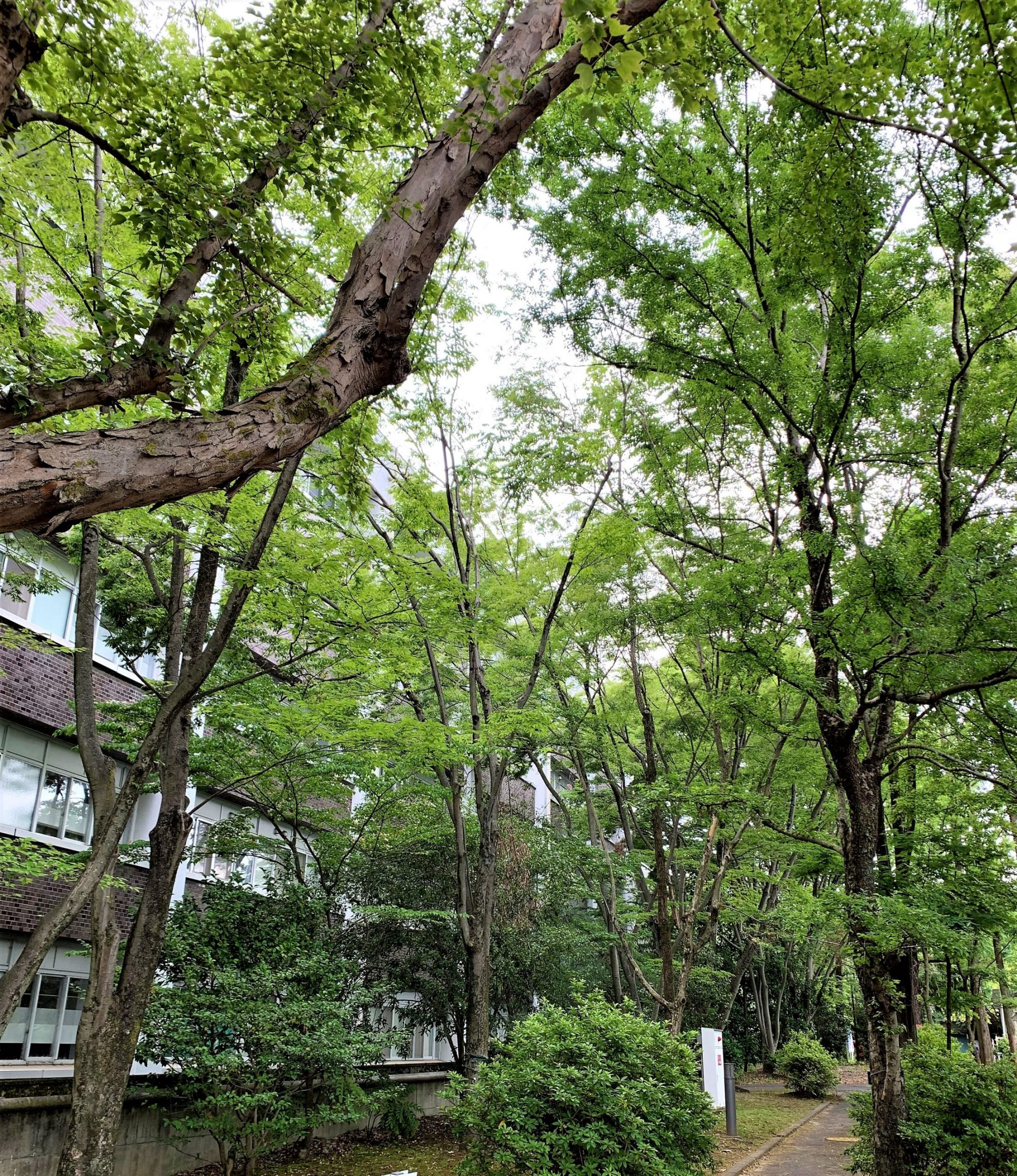 京都大学RE:CONNECT