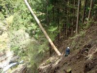 法頭危険木の処理