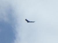 飛行するUAV